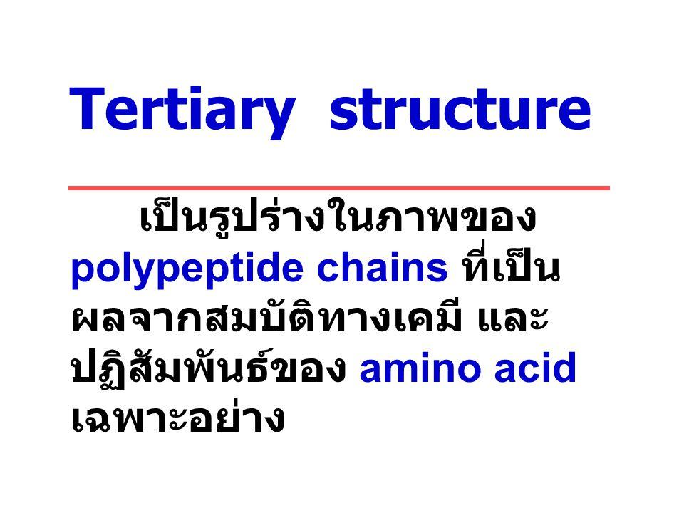 Tertiary structure เป็นรูปร่างในภาพของ polypeptide chains ที่เป็น ผลจากสมบัติทางเคมี และ ปฏิสัมพันธ์ของ amino acid เฉพาะอย่าง