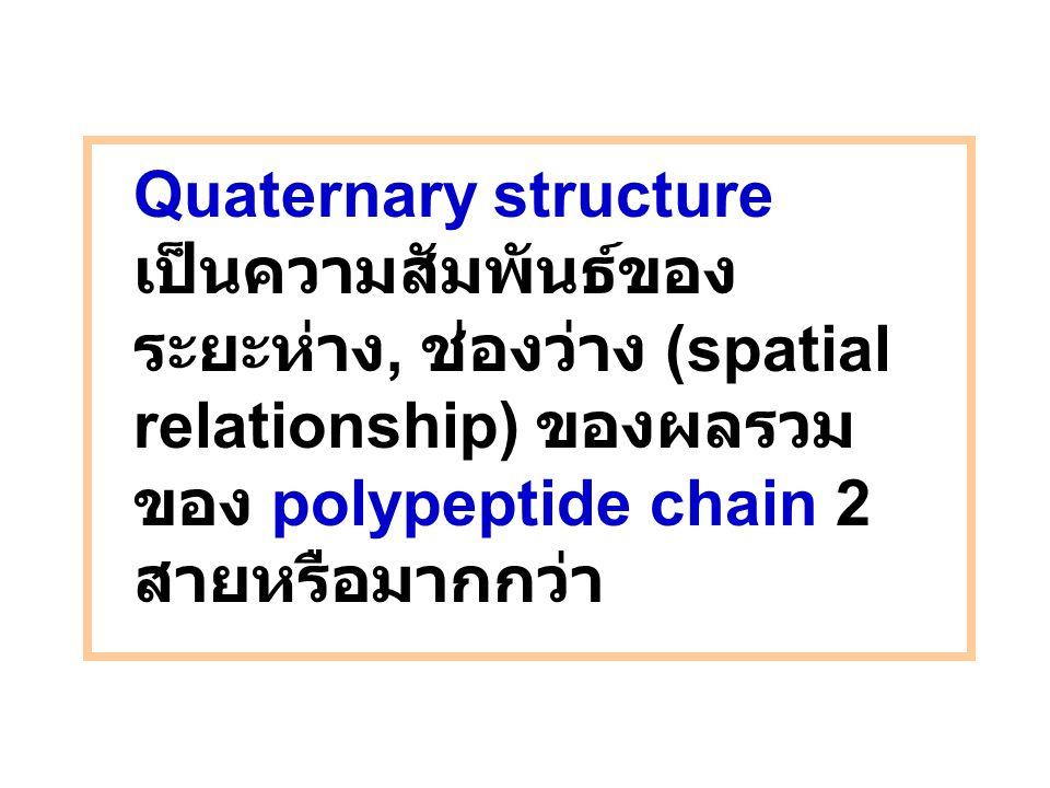 Quaternary structure เป็นความสัมพันธ์ของ ระยะห่าง, ช่องว่าง (spatial relationship) ของผลรวม ของ polypeptide chain 2 สายหรือมากกว่า