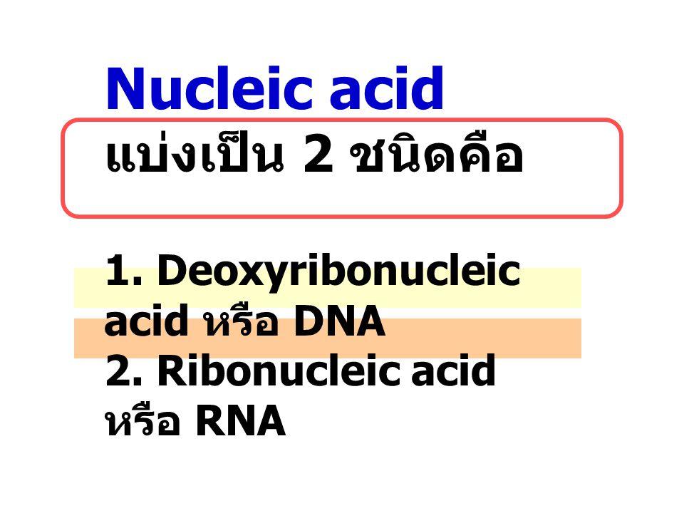 Nucleic acid แบ่งเป็น 2 ชนิดคือ 1. Deoxyribonucleic acid หรือ DNA 2. Ribonucleic acid หรือ RNA