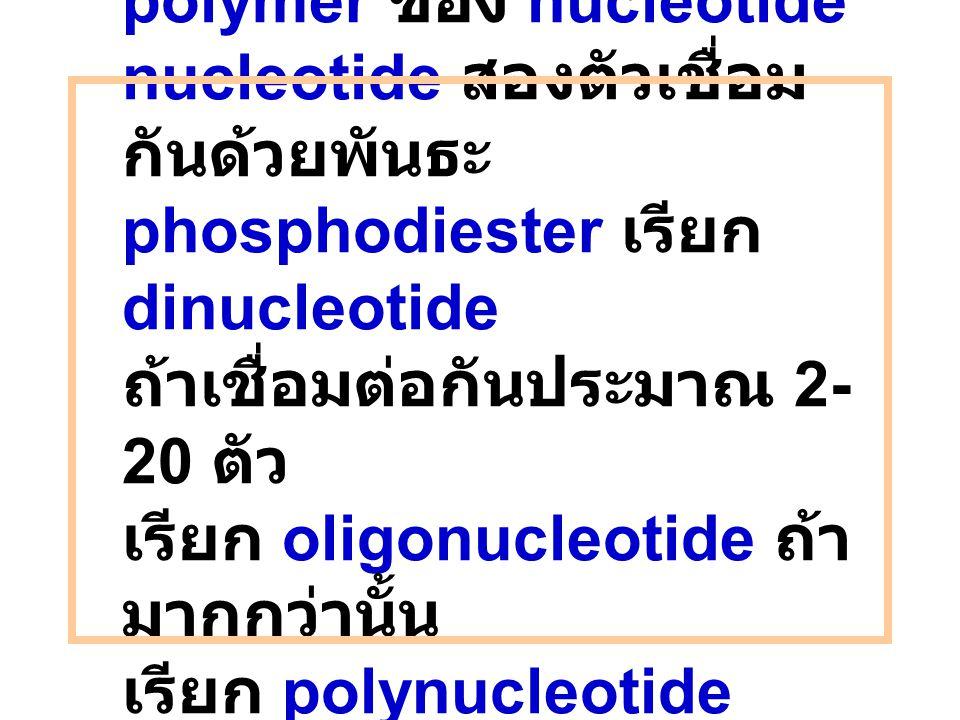 Nucleic acid เป็น polymer ของ nucleotide nucleotide สองตัวเชื่อม กันด้วยพันธะ phosphodiester เรียก dinucleotide ถ้าเชื่อมต่อกันประมาณ 2- 20 ตัว เรียก