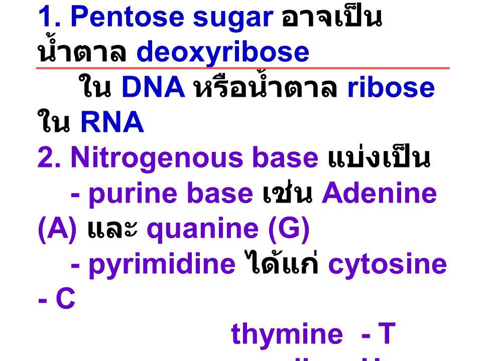 Nucleotide ประกอบด้วย 1. Pentose sugar อาจเป็น น้ำตาล deoxyribose ใน DNA หรือน้ำตาล ribose ใน RNA 2. Nitrogenous base แบ่งเป็น - purine base เช่น Aden