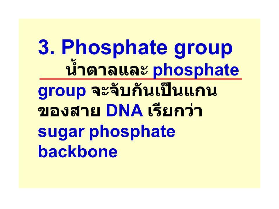3. Phosphate group น้ำตาลและ phosphate group จะจับกันเป็นแกน ของสาย DNA เรียกว่า sugar phosphate backbone
