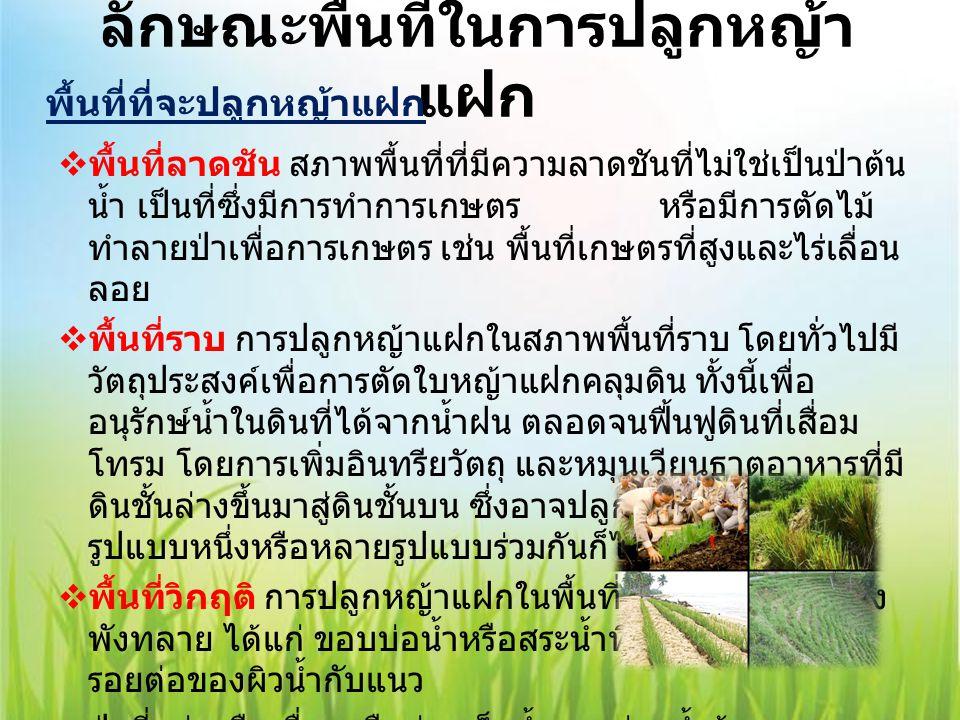 ประโยชน์ของการปลูกหญ้าแฝก 1.) ด้านอนุรักษ์ดินและ น้ำ - ป้องกันการชะล้างพังทลาย ของดิน - แถวหญ้าแฝกช่วยกักเก็บ ตะกอนดิน - ลดความแรงของน้ำที่ไหล บ่า - ช่วยกักเก็บน้ำไว้ในดินและ พื้นที่ตอนบน - ลดการสูญเสียธาตุอาหาร พืชจากพื้นที่ 3.) ด้านรักษา สภาพแวดล้อม - ช่วยรักษาคุณภาพน้ำและ แหล่งน้ำ - ดูดซับโลหะหนักจาก สภาพแวดล้อม - ช่วยในการบำบัดและกรอง น้ำเสีย - ป้องกันการพังทลายของ ไหล่ถนน 2.) ด้านฟื้นฟูและ ปรับปรุงดิน - เพิ่มอินทรียวัตถุแก่ดิน - รักษาความชื้นในดิน - ช่วยให้ดินมีการระบายน้ำดี ขึ้น - ทำให้ดินโปร่งและระบาย อากาศของดินดี - เพิ่มกิจกรรมของจุลินทรีย์ ในดิน