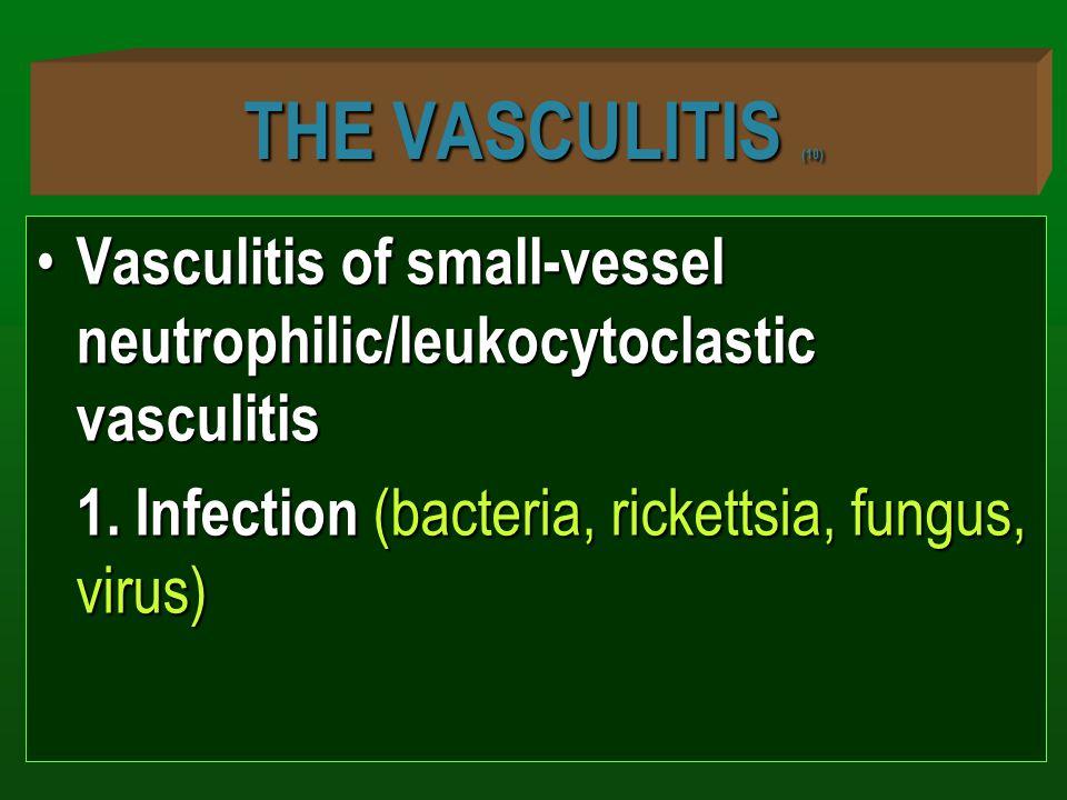 THE VASCULITIS (10) Vasculitis of small-vessel neutrophilic/leukocytoclastic vasculitis Vasculitis of small-vessel neutrophilic/leukocytoclastic vascu