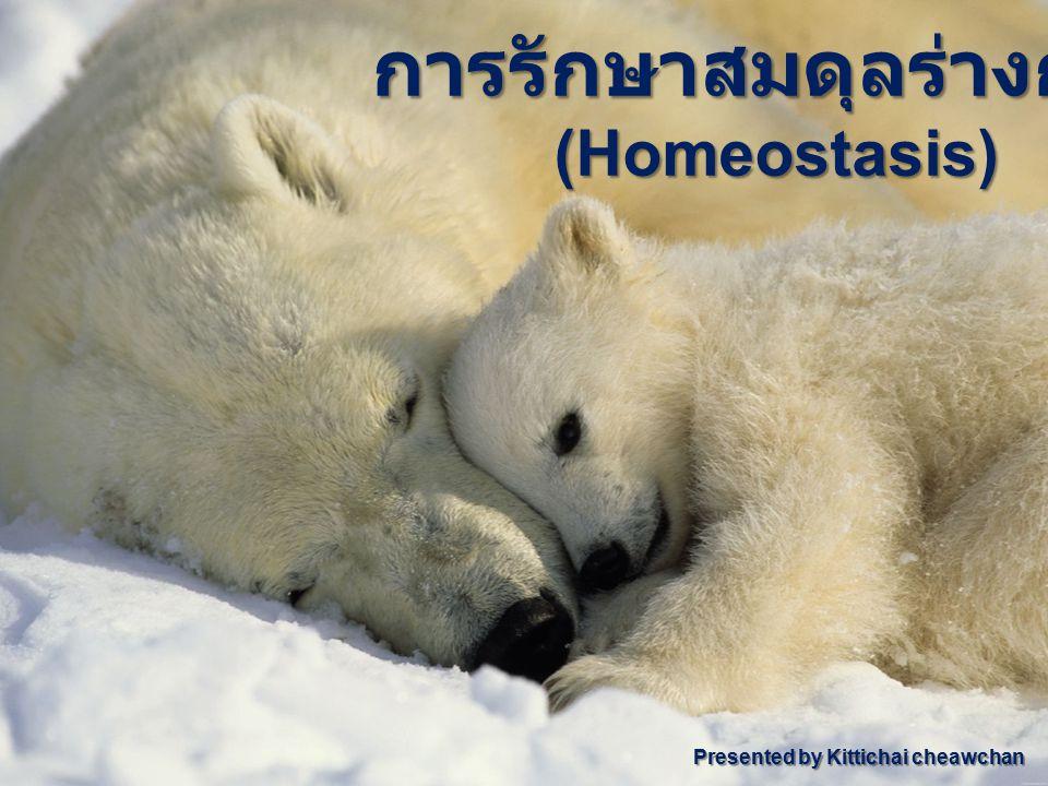 การรักษาสมดุลร่างกาย (Homeostasis) Presented by Kittichai cheawchan