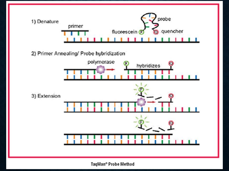 cDNA synthesis 48 o C 30 min cDNA synthesis 48 o C 30 min Denature 95 o C 10 min Denature 95 o C 10 min Amplification 95 o C 15 sec, 60 o C 60 sec for