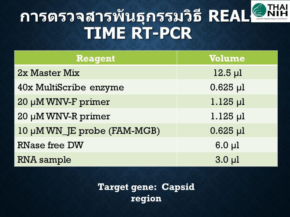 ReagentVolume 2x Master Mix12.5 µl 40x MultiScribe enzyme0.625 µl 20 µM WNV-F primer1.125 µl 20 µM WNV-R primer1.125 µl 10 µM WN_JE probe (FAM-MGB)0.6