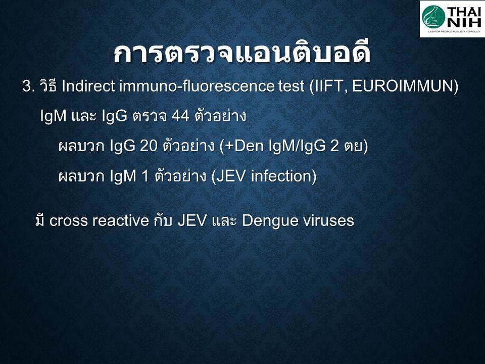 การตรวจแอนติบอดี 3. วิธี Indirect immuno-fluorescence test (IIFT, EUROIMMUN) IgM และ IgG ตรวจ 44 ตัวอย่าง IgM และ IgG ตรวจ 44 ตัวอย่าง ผลบวก IgG 20 ตั