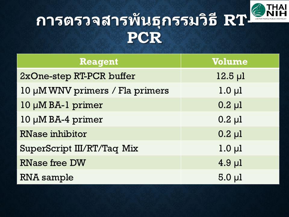 ReagentVolume 2xOne-step RT-PCR buffer12.5 µl 10 µM WNV primers / Fla primers1.0 µl 10 µM BA-1 primer0.2 µl 10 µM BA-4 primer0.2 µl RNase inhibitor0.2