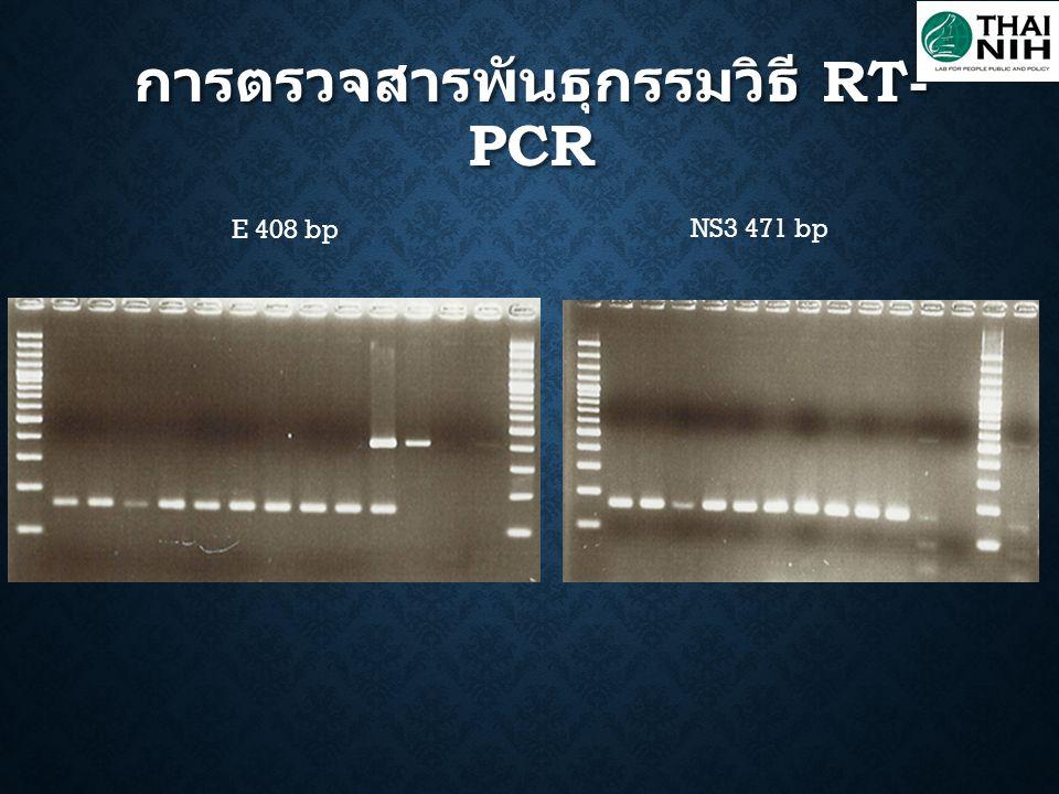การตรวจสารพันธุกรรมวิธี RT- PCR E 408 bp NS3 471 bp