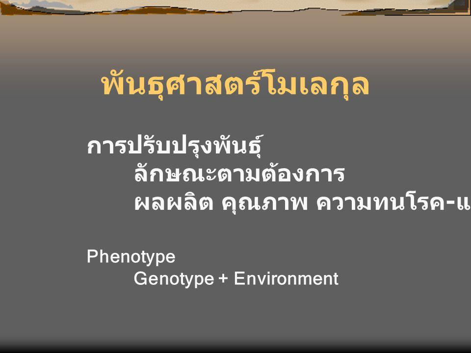 พันธุศาสตร์โมเลกุล การปรับปรุงพันธุ์ ลักษณะตามต้องการ ผลผลิต คุณภาพ ความทนโรค - แมลง Phenotype Genotype + Environment