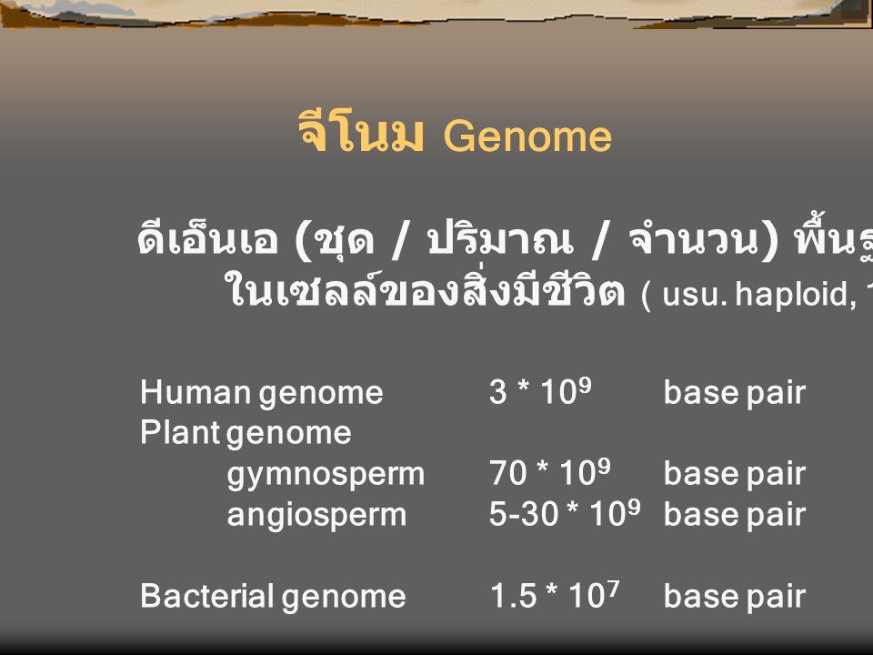 จีโนม Genome ดีเอ็นเอ ( ชุด / ปริมาณ / จำนวน ) พื้นฐาน ในเซลล์ของสิ่งมีชีวิต ( usu. haploid, 1n) Human genome3 * 10 9 base pair Plant genome gymnosper