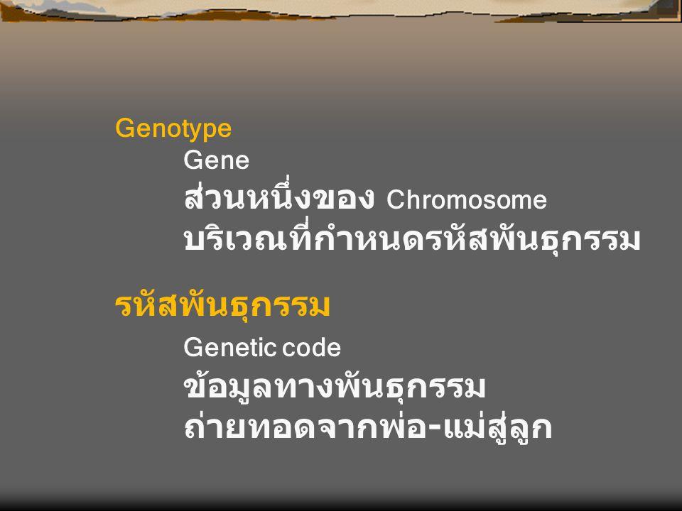 Genotype Gene ส่วนหนึ่งของ Chromosome บริเวณที่กำหนดรหัสพันธุกรรม รหัสพันธุกรรม Genetic code ข้อมูลทางพันธุกรรม ถ่ายทอดจากพ่อ - แม่สู่ลูก