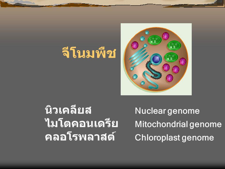 จีโนมพืช นิวเคลียส Nuclear genome ไมโตคอนเดรีย Mitochondrial genome คลอโรพลาสต์ Chloroplast genome