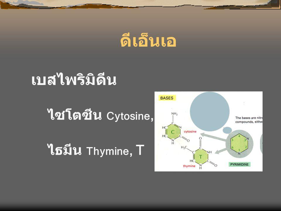 ดีเอ็นเอ เบสไพริมิดีน ไซโตซีน Cytosine, C ไธมีน Thymine, T