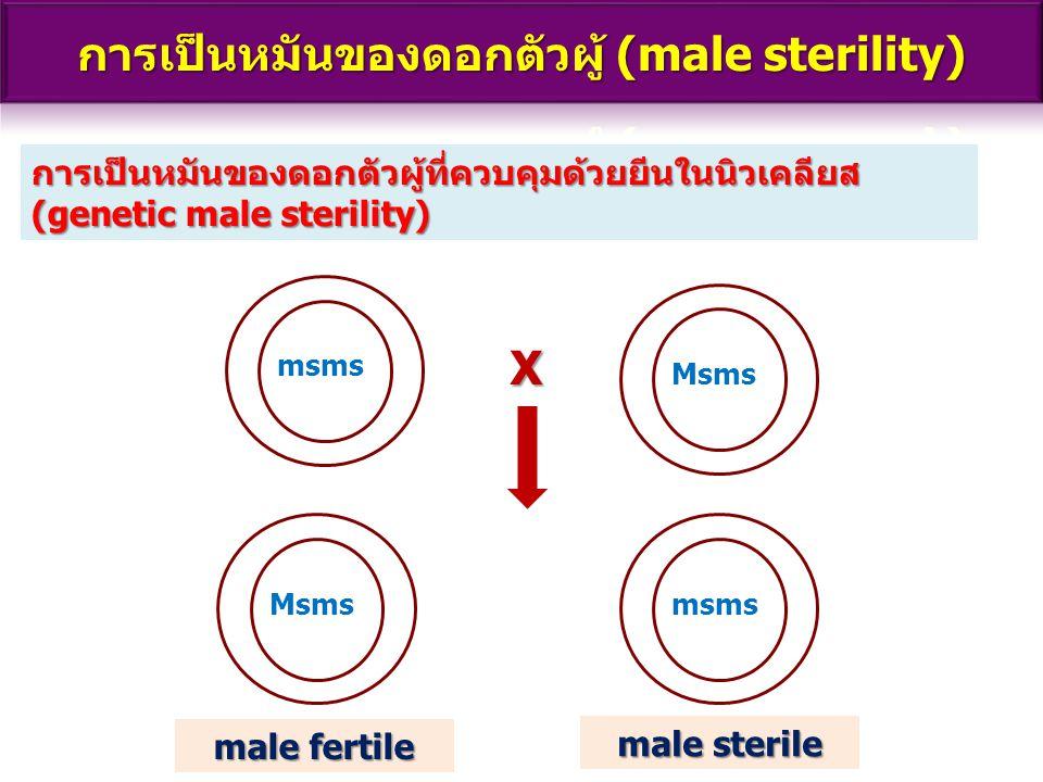 การเป็นหมันของดอกตัวผู้ที่ควบคุมด้วยยีนในนิวเคลียส (genetic male sterility) msms Msms msms X male fertile male sterile