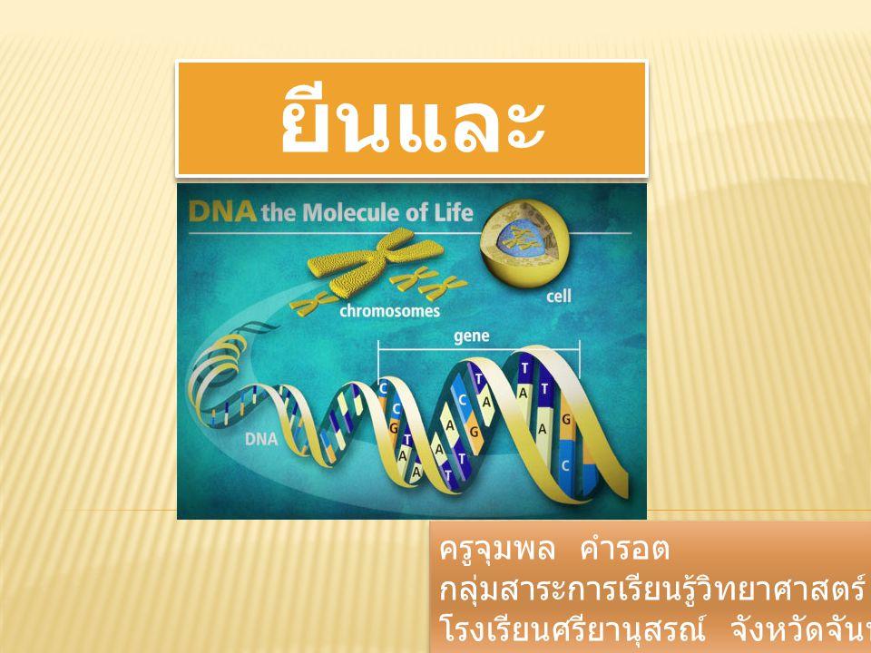 องค์ประกอบทางเคมีของ DNA DNA เป็นพอลิเมอร์ ที่ประกอบด้วย มอนอเมอร์ ที่เรียกว่า นิวคลีโอ ไทด์ (nucleotide)