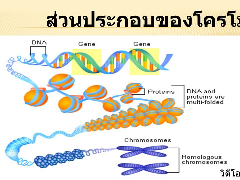 ส่วนประกอบของโครโมโซม วิดีโอ