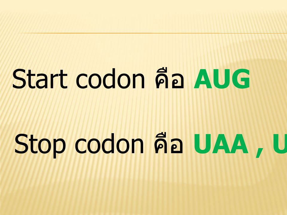 Start codon คือ AUG Stop codon คือ UAA, UAG และ UGA
