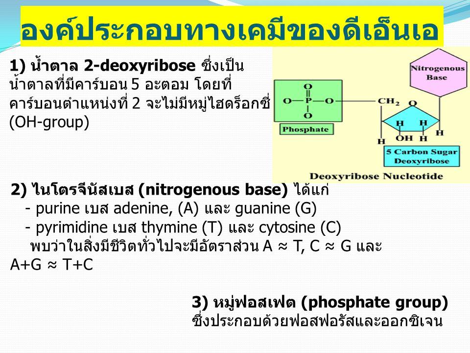 องค์ประกอบทางเคมีของดีเอ็นเอ 1) น้ำตาล 2-deoxyribose ซึ่งเป็น น้ำตาลที่มีคาร์บอน 5 อะตอม โดยที่ คาร์บอนตำแหน่งที่ 2 จะไม่มีหมู่ไฮดร็อกซี่ (OH-group) 2