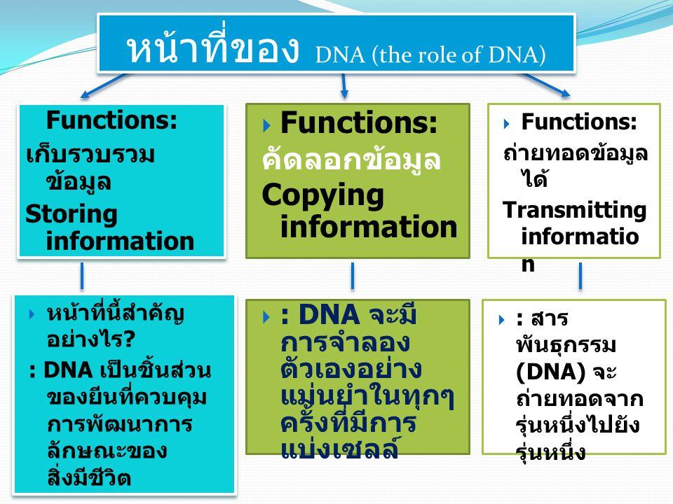 Functions: เก็บรวบรวม ข้อมูล Storing information Functions: เก็บรวบรวม ข้อมูล Storing information  Functions: คัดลอกข้อมูล Copying information  Func