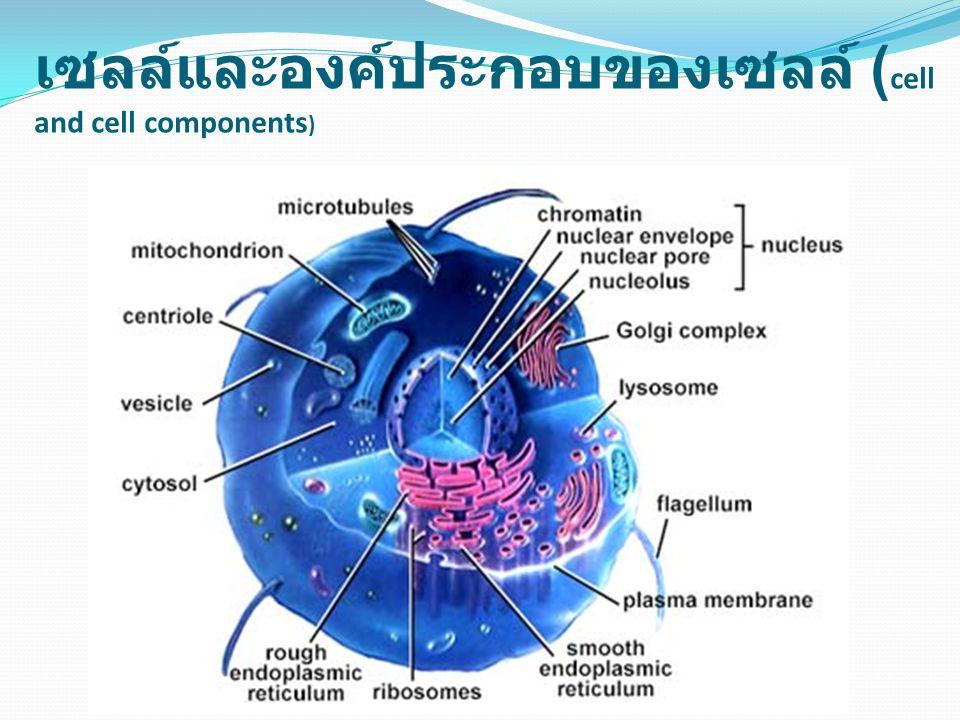ยีน จะอยู่ในเซลล์ทุกเซลล์ของ สัตว์ ยีน และ โครโมโซม (Gene and chromosome)