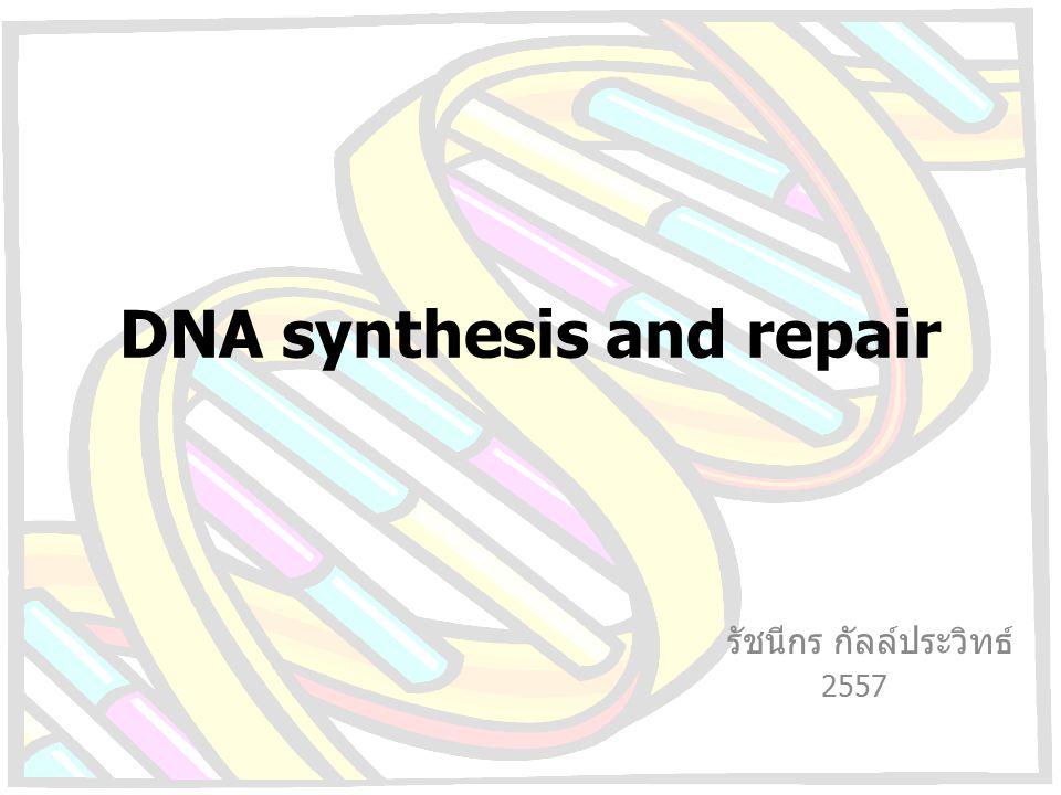 DNA synthesis and repair รัชนีกร กัลล์ประวิทธ์ 2557