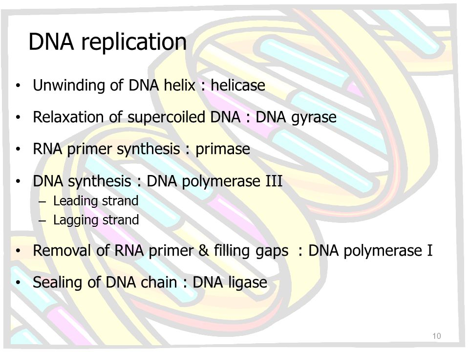 DNA replication Unwinding of DNA helix : helicase Relaxation of supercoiled DNA : DNA gyrase RNA primer synthesis : primase DNA synthesis : DNA polyme