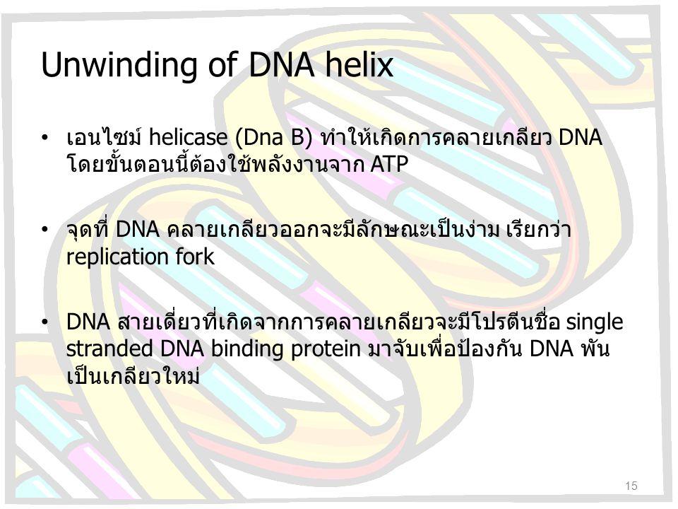 Unwinding of DNA helix เอนไซม์ helicase (Dna B) ทำให้เกิดการคลายเกลียว DNA โดยขั้นตอนนี้ต้องใช้พลังงานจาก ATP จุดที่ DNA คลายเกลียวออกจะมีลักษณะเป็นง่