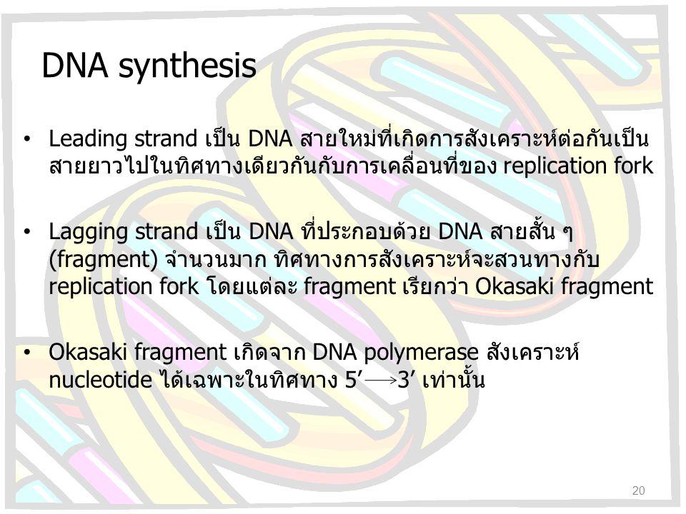 DNA synthesis Leading strand เป็น DNA สายใหม่ที่เกิดการสังเคราะห์ต่อกันเป็น สายยาวไปในทิศทางเดียวกันกับการเคลื่อนที่ของ replication fork Lagging stran
