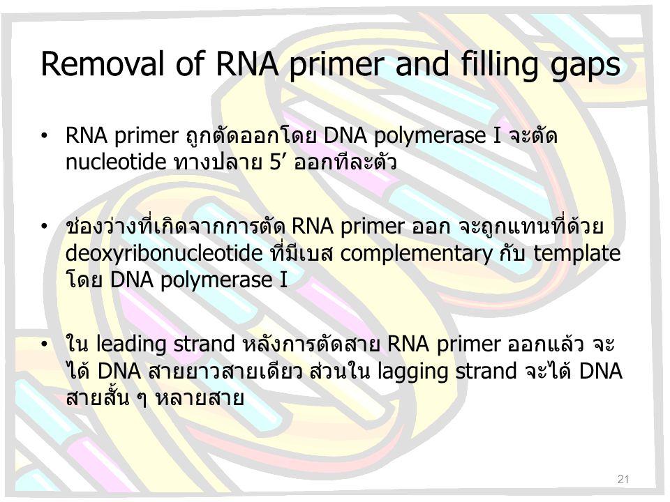 Removal of RNA primer and filling gaps RNA primer ถูกตัดออกโดย DNA polymerase I จะตัด nucleotide ทางปลาย 5' ออกทีละตัว ช่องว่างที่เกิดจากการตัด RNA pr
