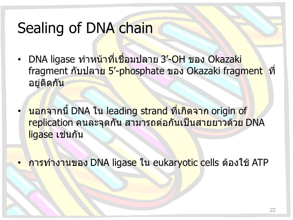 Sealing of DNA chain DNA ligase ทำหน้าที่เชื่อมปลาย 3'-OH ของ Okazaki fragment กับปลาย 5'-phosphate ของ Okazaki fragment ที่ อยู่ติดกัน นอกจากนี้ DNA