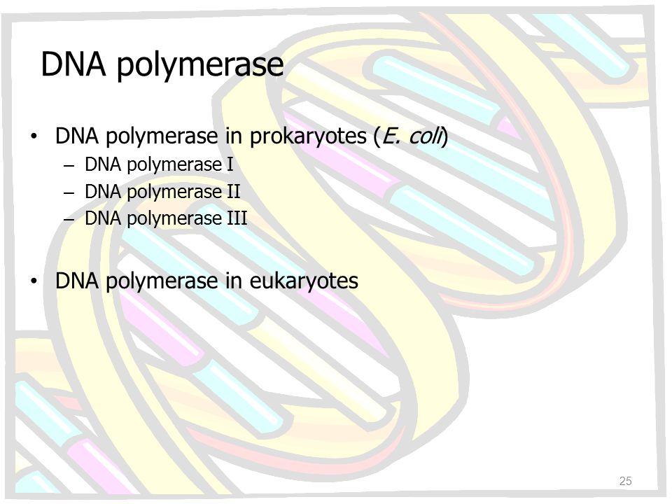 DNA polymerase DNA polymerase in prokaryotes (E. coli) – DNA polymerase I – DNA polymerase II – DNA polymerase III DNA polymerase in eukaryotes 25