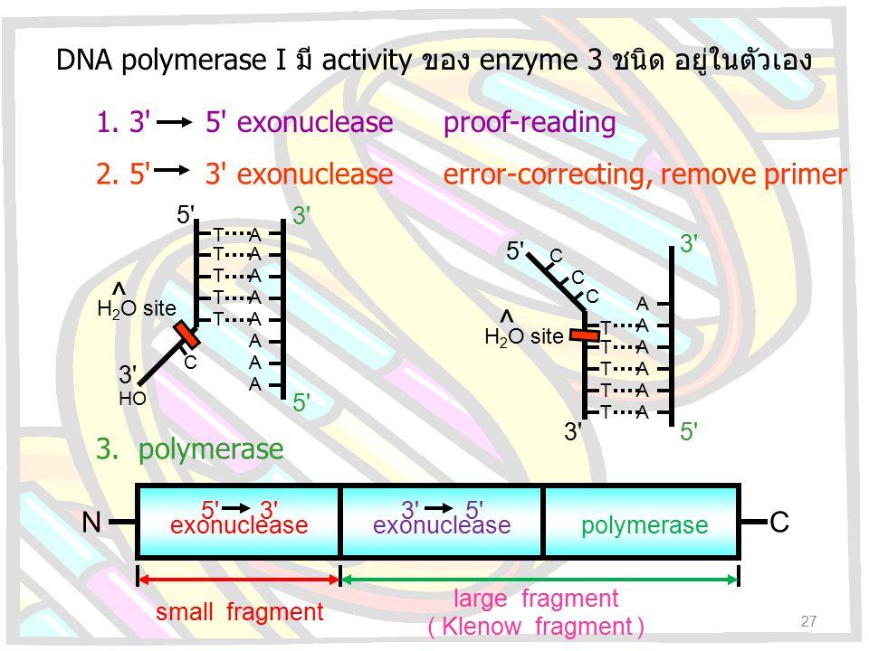 DNA polymerase I มี activity ของ enzyme 3 ชนิด อยู่ในตัวเอง 3' 5' exonuclease 5' 3' exonuclease polymerase NC small fragment large fragment ( Klenow f
