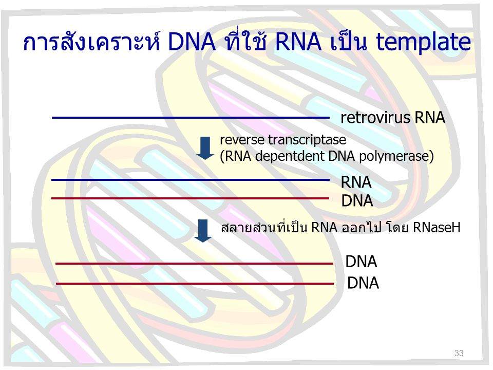 retrovirus RNA reverse transcriptase (RNA depentdent DNA polymerase) RNA DNA สลายส่วนที่เป็น RNA ออกไป โดย RNaseH DNA การสังเคราะห์ DNA ที่ใช้ RNA เป็