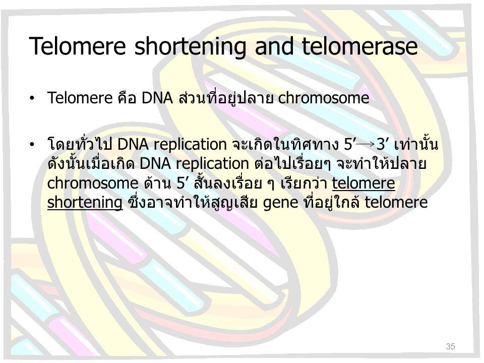 Telomere shortening and telomerase Telomere คือ DNA ส่วนที่อยู่ปลาย chromosome โดยทั่วไป DNA replication จะเกิดในทิศทาง 5' 3' เท่านั้น ดังนั้นเมื่อเกิ