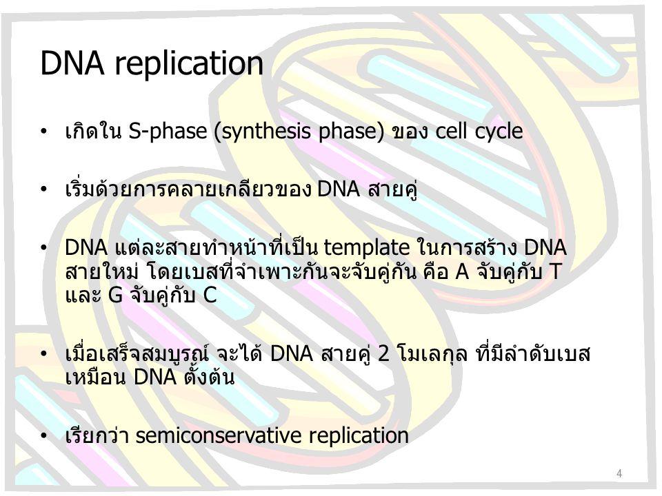 DNA replication เกิดใน S-phase (synthesis phase) ของ cell cycle เริ่มด้วยการคลายเกลียวของ DNA สายคู่ DNA แต่ละสายทำหน้าที่เป็น template ในการสร้าง DNA