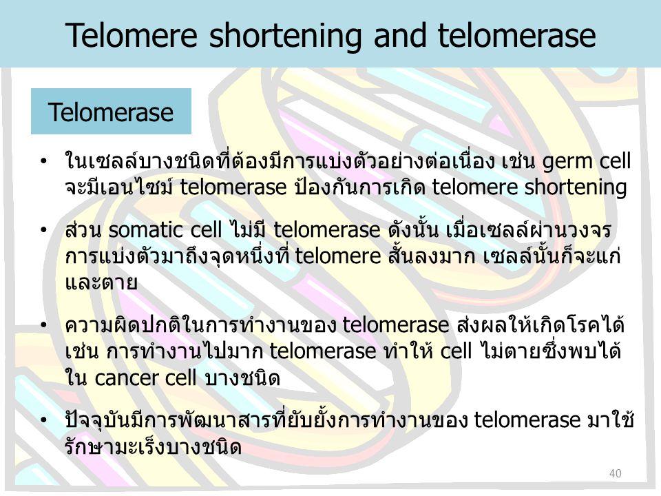 Telomerase ในเซลล์บางชนิดที่ต้องมีการแบ่งตัวอย่างต่อเนื่อง เช่น germ cell จะมีเอนไซม์ telomerase ป้องกันการเกิด telomere shortening ส่วน somatic cell