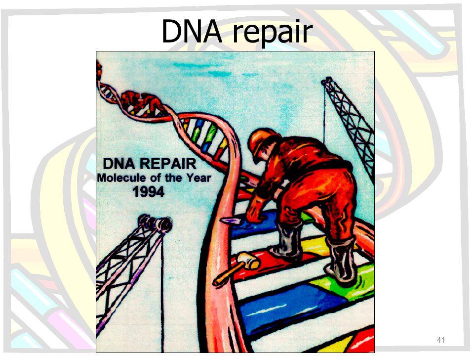 DNA repair 41