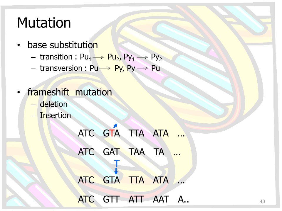 Mutation base substitution – transition : Pu 1 Pu 2, Py 1 Py 2 – transversion : Pu Py, Py Pu frameshift mutation – deletion – Insertion ATC GTA TTA AT
