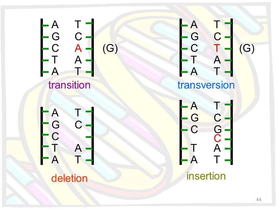 A G C T A T C A A T A G C T A T C A T A G C T A T C T A T A G C T A T C G A T C (G) transition deletion transversion insertion 44