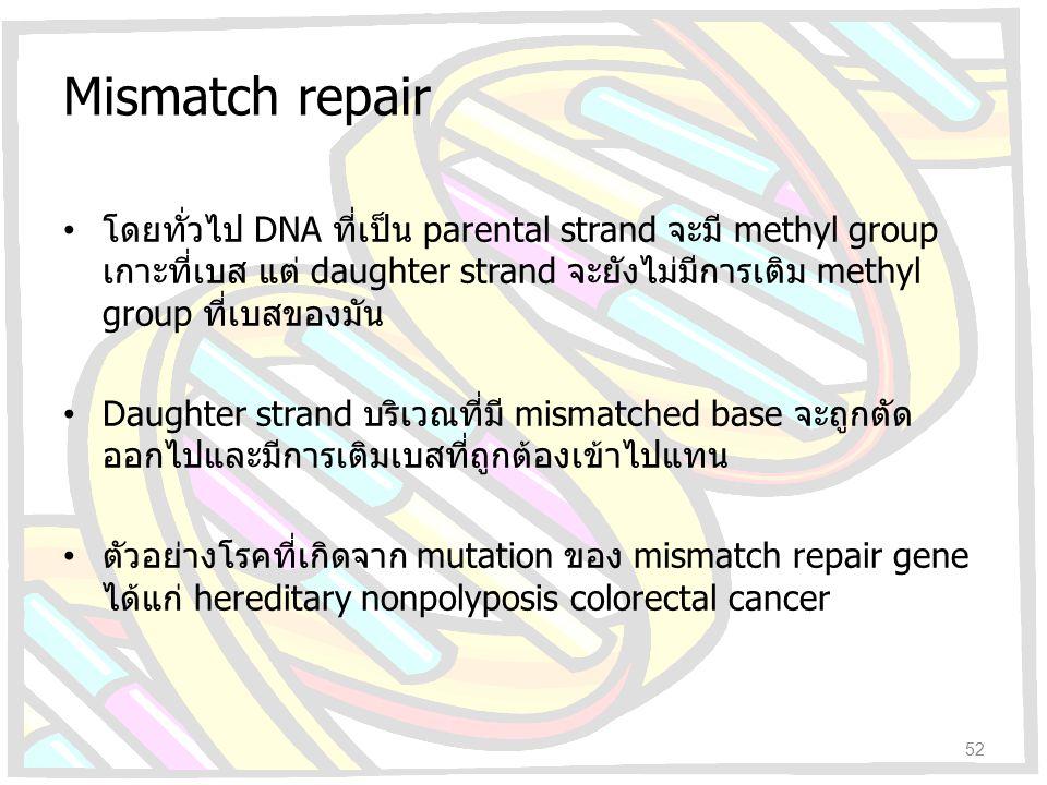 Mismatch repair โดยทั่วไป DNA ที่เป็น parental strand จะมี methyl group เกาะที่เบส แต่ daughter strand จะยังไม่มีการเติม methyl group ที่เบสของมัน Dau