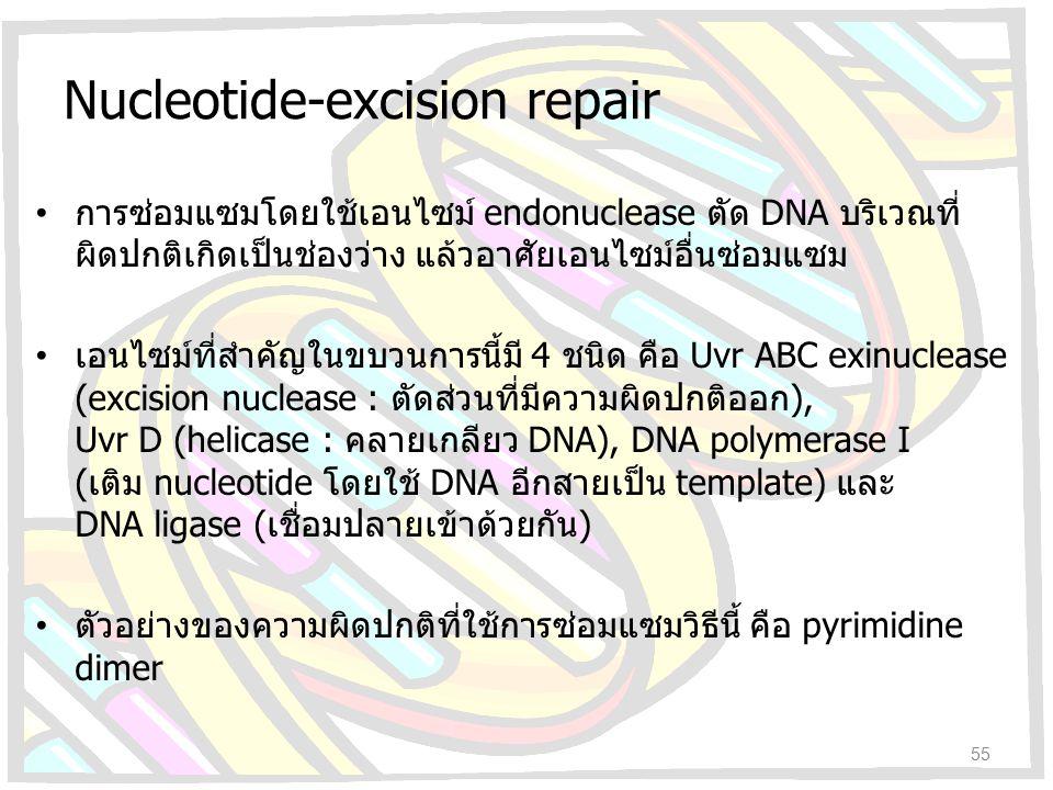 Nucleotide-excision repair การซ่อมแซมโดยใช้เอนไซม์ endonuclease ตัด DNA บริเวณที่ ผิดปกติเกิดเป็นช่องว่าง แล้วอาศัยเอนไซม์อื่นซ่อมแซม เอนไซม์ที่สำคัญใ