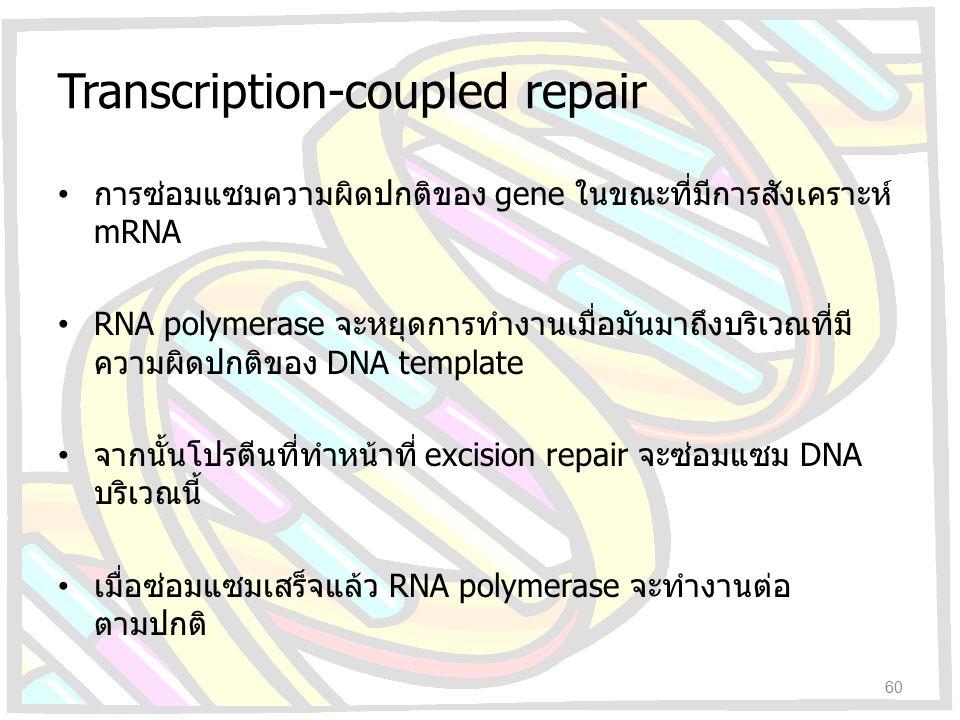 Transcription-coupled repair การซ่อมแซมความผิดปกติของ gene ในขณะที่มีการสังเคราะห์ mRNA RNA polymerase จะหยุดการทำงานเมื่อมันมาถึงบริเวณที่มี ความผิดป