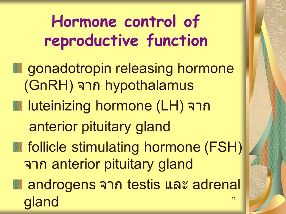32 Hormone control of reproductive function gonadotropin releasing hormone (GnRH) จาก hypothalamus luteinizing hormone (LH) จาก anterior pituitary gla