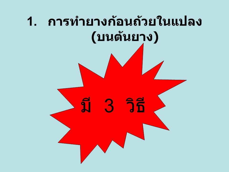 1. การทำยางก้อนถ้วยในแปลง ( บนต้นยาง ) มี 3 วิธี