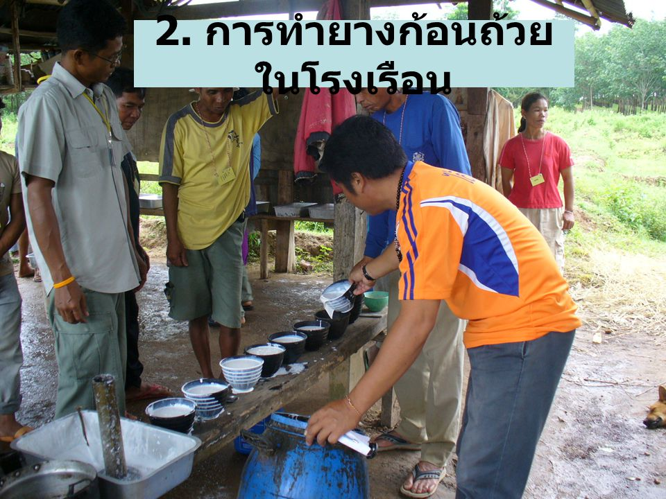 2. การทำยางก้อนถ้วย ในโรงเรือน