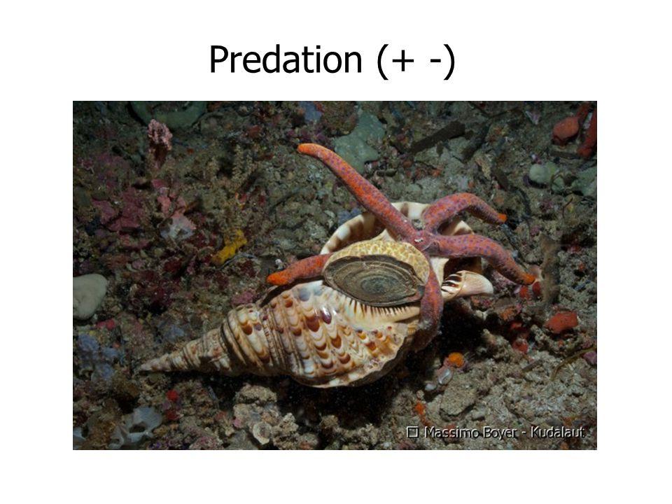 Predation (+ -)