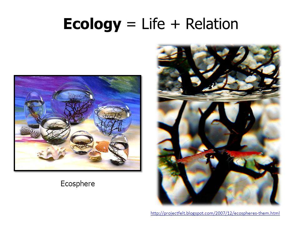 Ecology = Life + Relation http://projectfelt.blogspot.com/2007/12/ecospheres-them.html Ecosphere