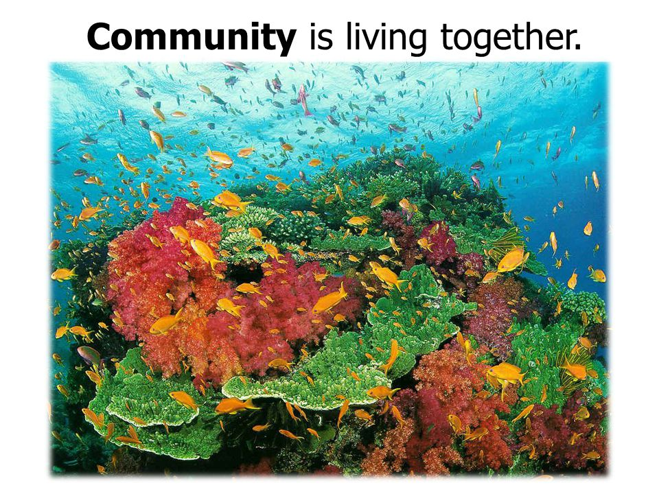 Habitat is the place where life lives.